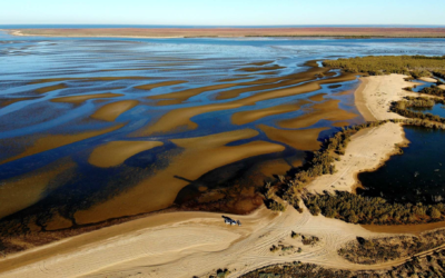 The Exmouth mystery: where science has barely grazed the surface