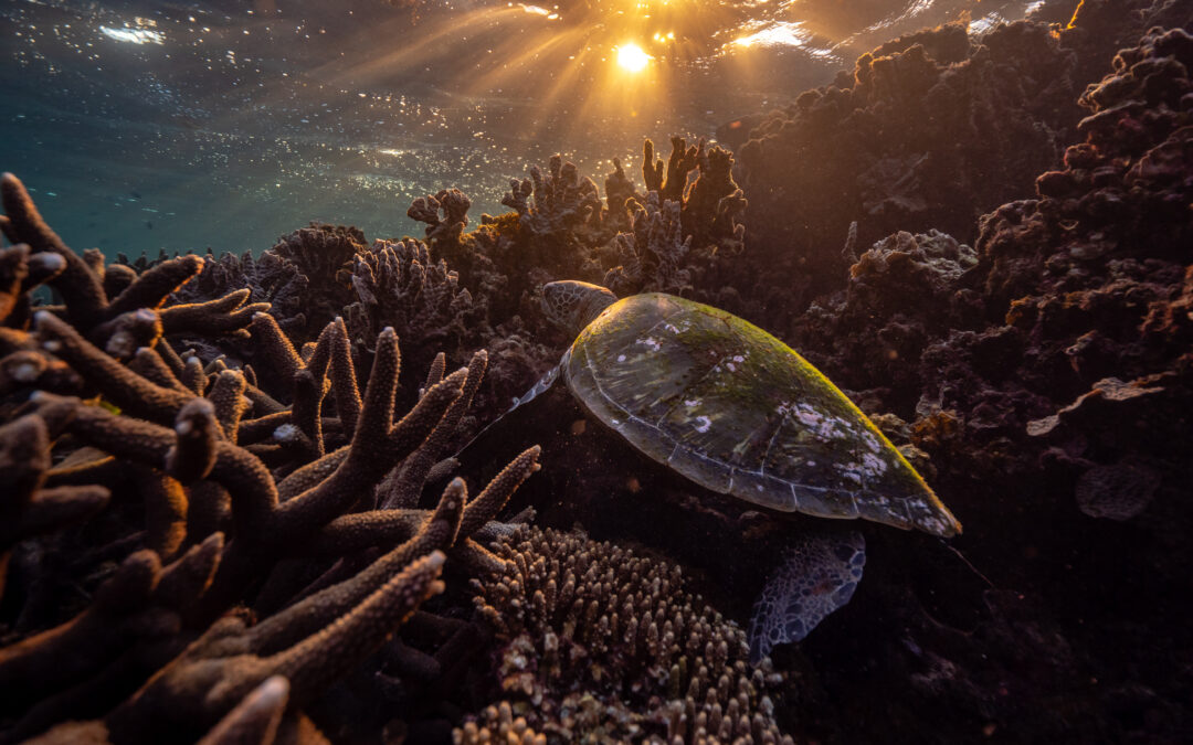 Global assessment of World Heritage sites raises concerns about Ningaloo