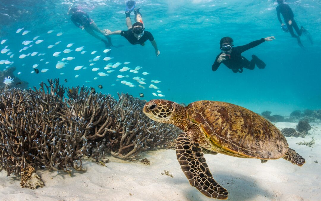 Ningaloo-Exmouth Gulf's natural drawcards are a job-creating engine: New economic analysis