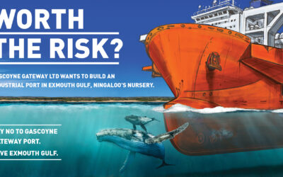 'Worth the Risk?': National ad campaign launched on risks to Exmouth Gulf humpback whales from proposed Gascoyne Gateway industrial port